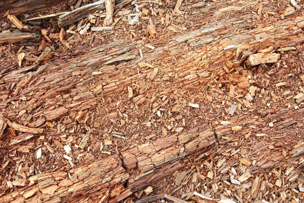 Zersetztes Holz im Wald