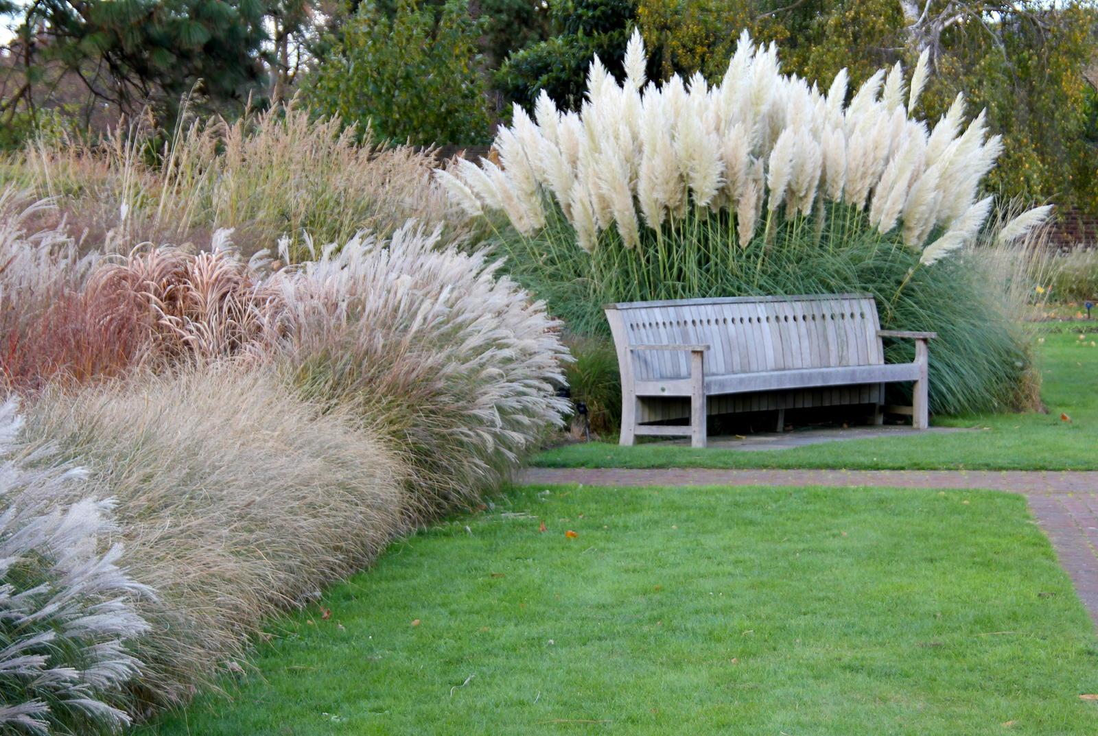 Ziergraser Fur Den Garten Die 10 Schonsten Plantura