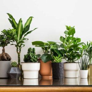 Zimmerpflanzen In Unterschiedlichen Töpfen Und In Unterschiedlichen Größen