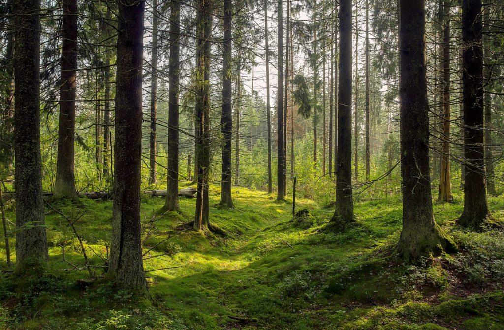 Bäume in Wald mit moosigem Boden