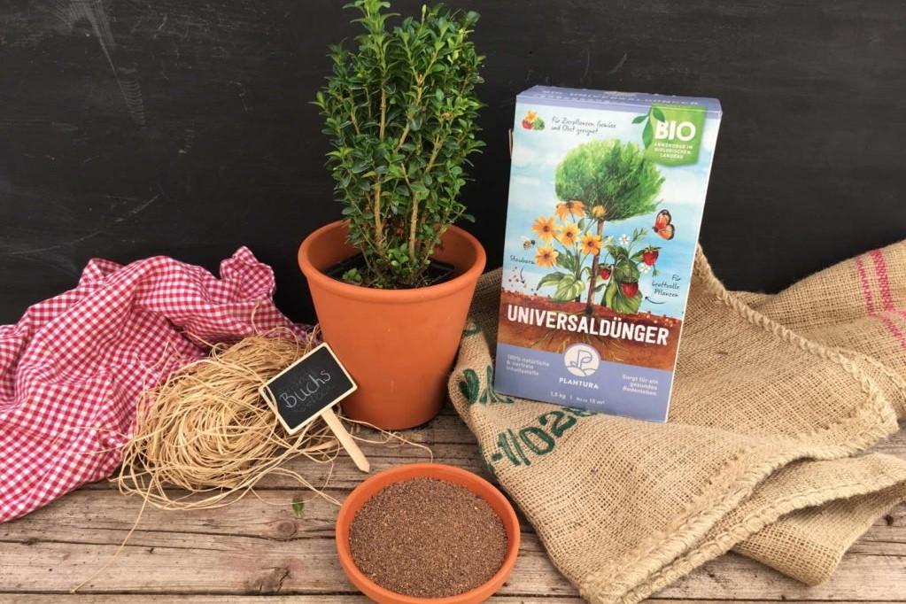 Plantura Bio-Universaldünger mit kleinem Buchsbaum