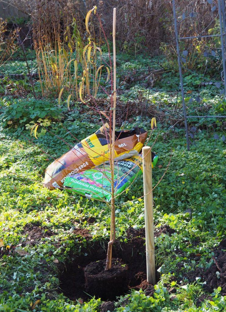 ganzer Pfirsichbaum mit Floragard