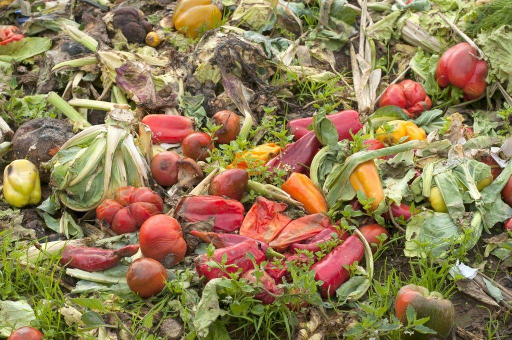 Verrottendes Gemüse auf Kompost