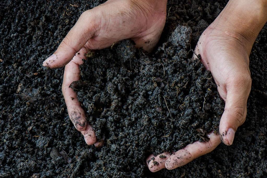Komposterde in Händen