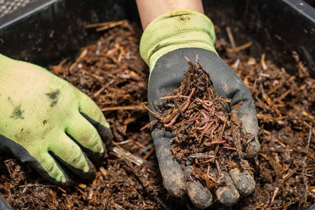 Kompostwürmer in Hand