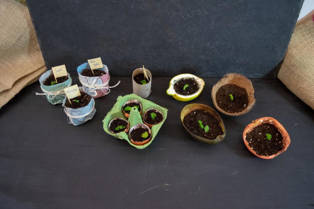 Alternative Aussaatgefäße zur Anzucht von Pflanzen