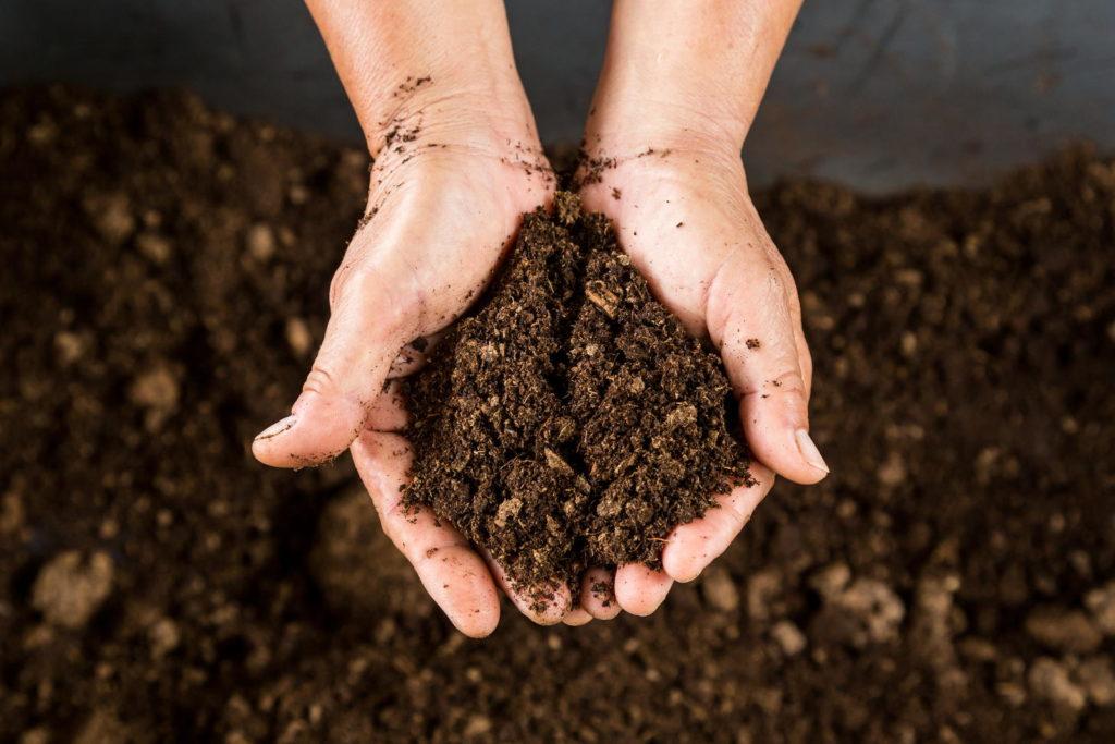 Erde mit Händen im Beet