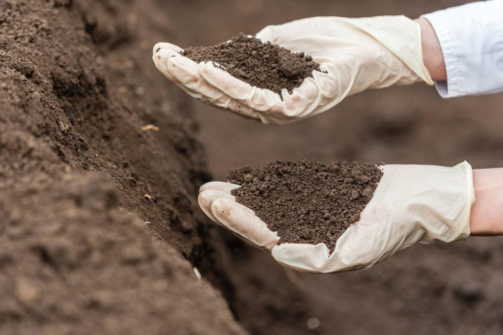 Behandschuhte Hände halten Erde