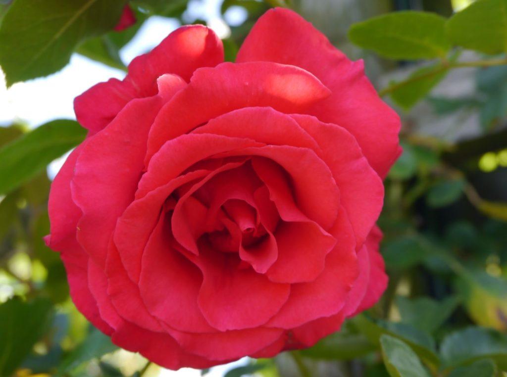 Rose Grandhotel