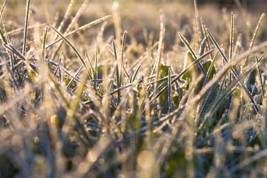Frost auf Rasen