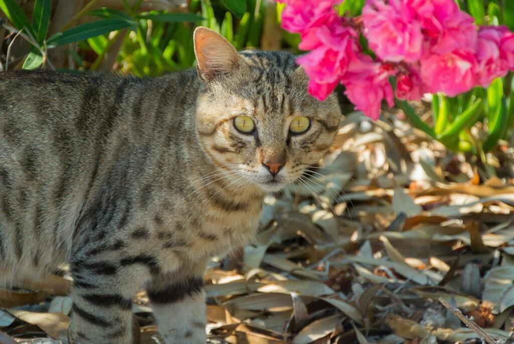 Katze steht unter Oleanderbusch