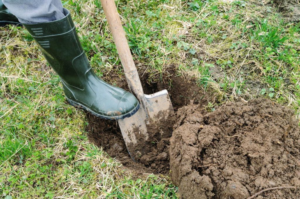 Pflanzloch wird in Rasen gegraben