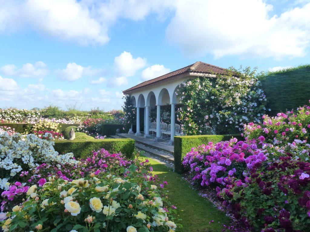 Rosengarten von David Austin Roses