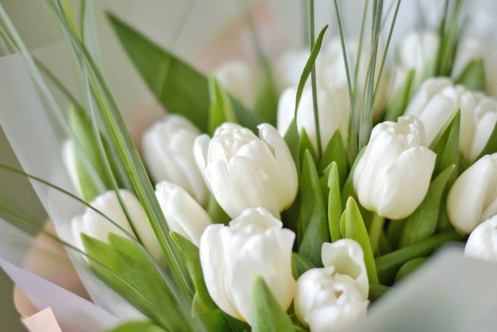 Ein Strauß weißer Tulpen