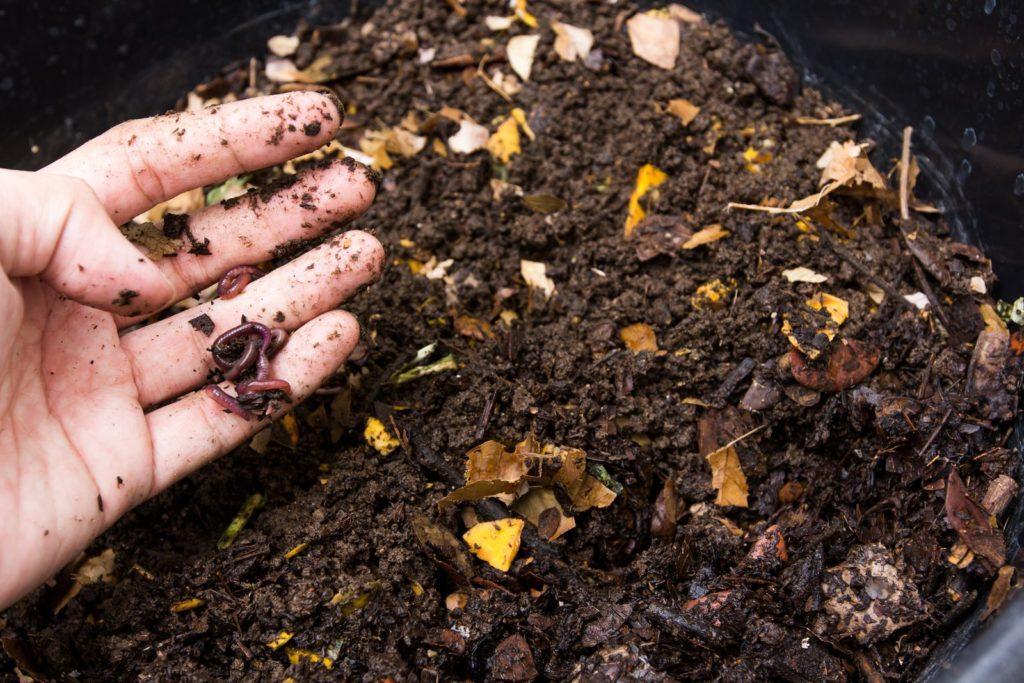 Wurm auf dem Kompost