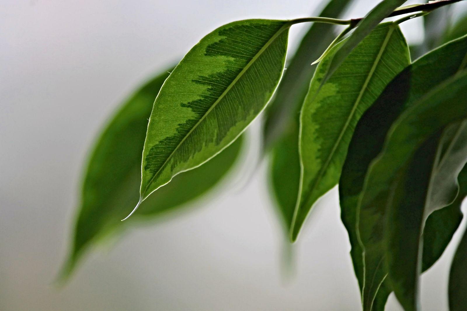 Wie Wirken Sich Pflanzen Generell Auf Das Raumklima Aus Plantura