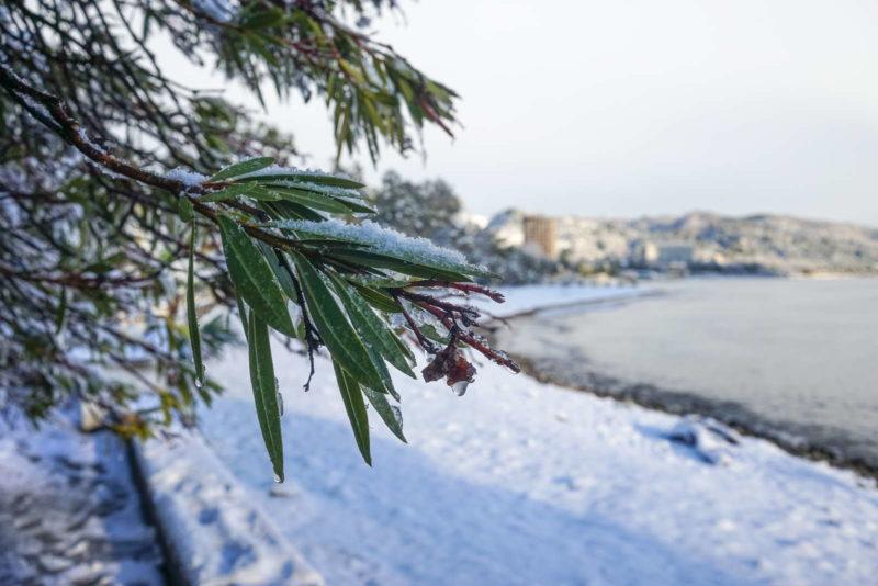 Eingeschneiter Oleanderzweig Vor Straße