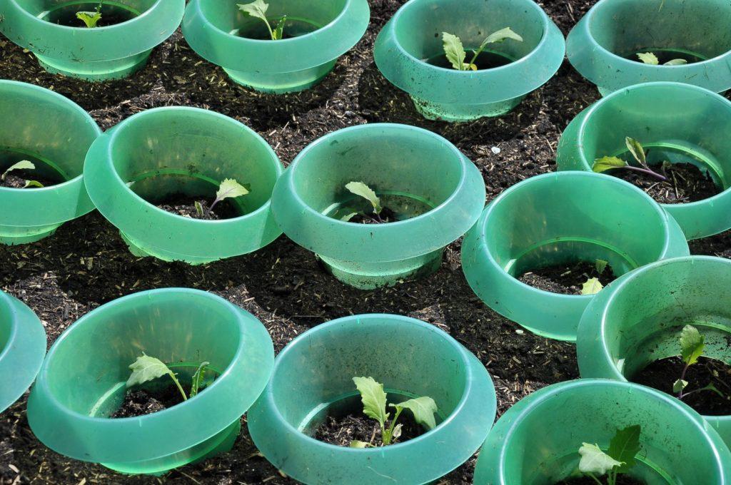 Gemüsebeet mit Schneckenschutzring