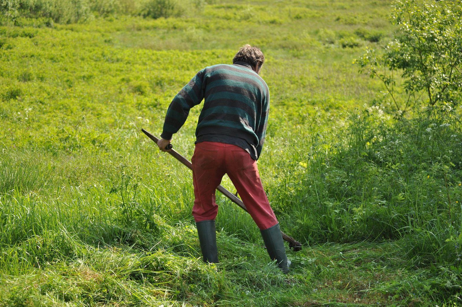 Beliebt Bevorzugt Nachhaltig den Rasen kürzen: Mit der Hand, mit Benzin oder Strom &YB_21