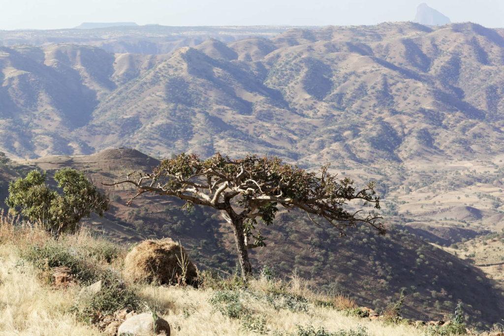 Weihrauchbaum vor Tal