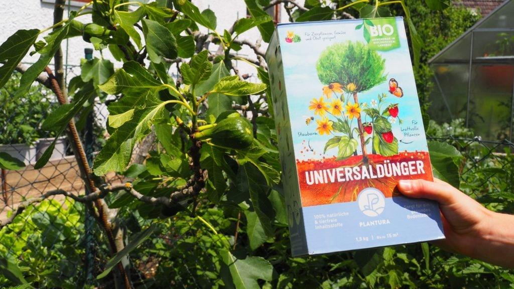 Feigenbaum neben dem Plantura Universaldünger