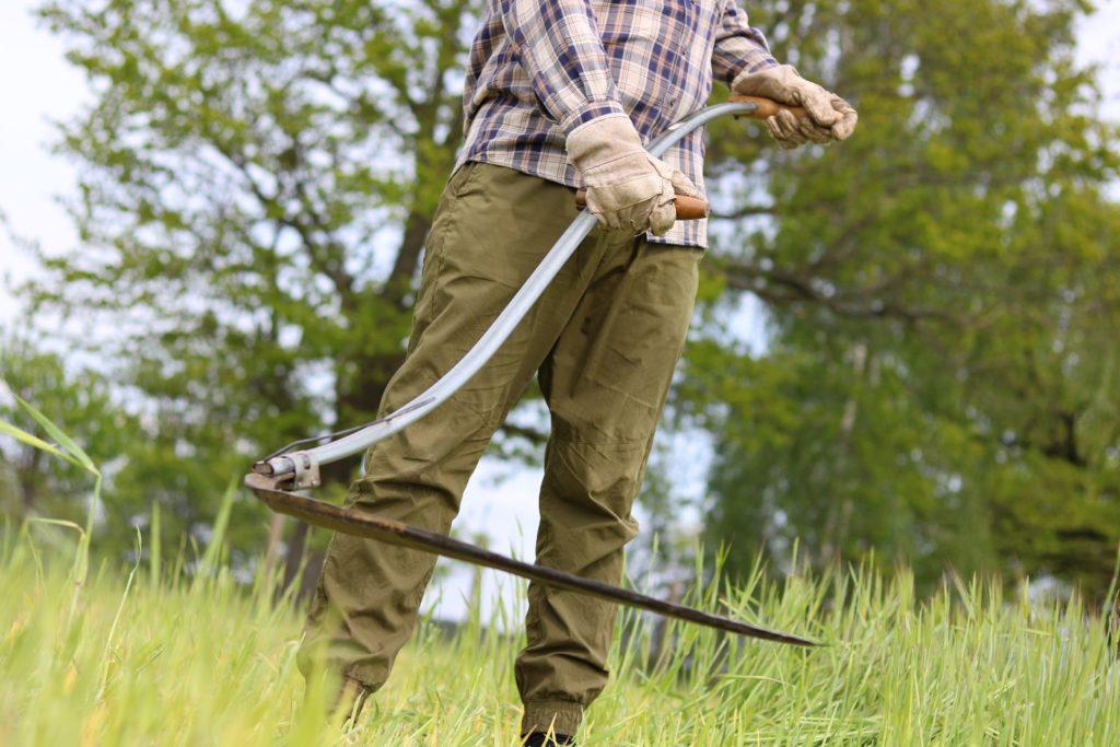 Rasen wird mit Sense gemäht