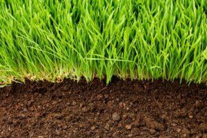 Rasen Wächst Aus Dem Boden