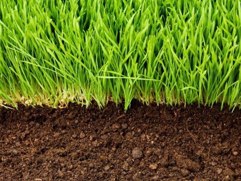 Bodenaktivator für Rasen: Richtige Anwendung & Produktempfehlung