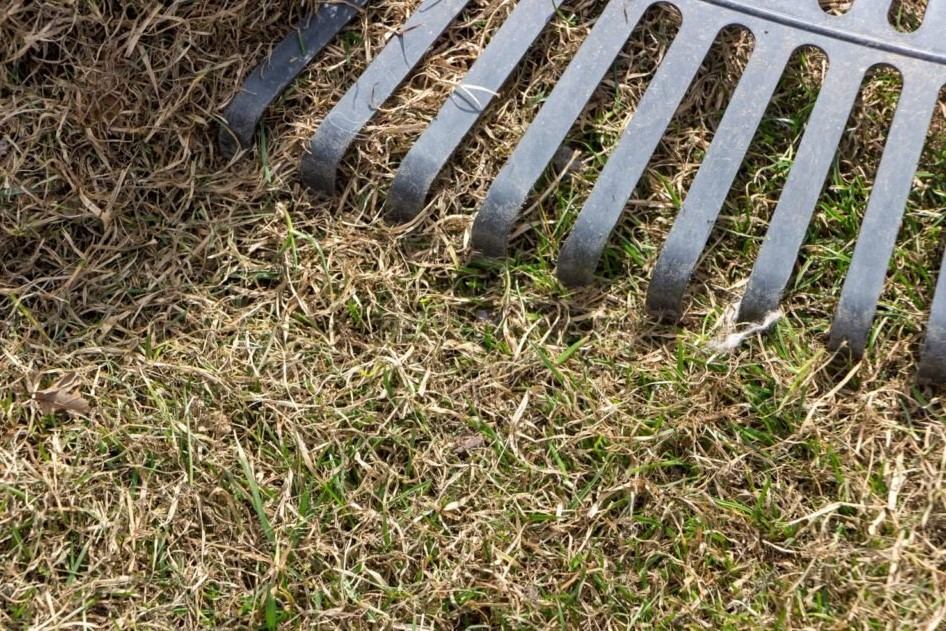 Kaputter Rasen mit Rasenfilz