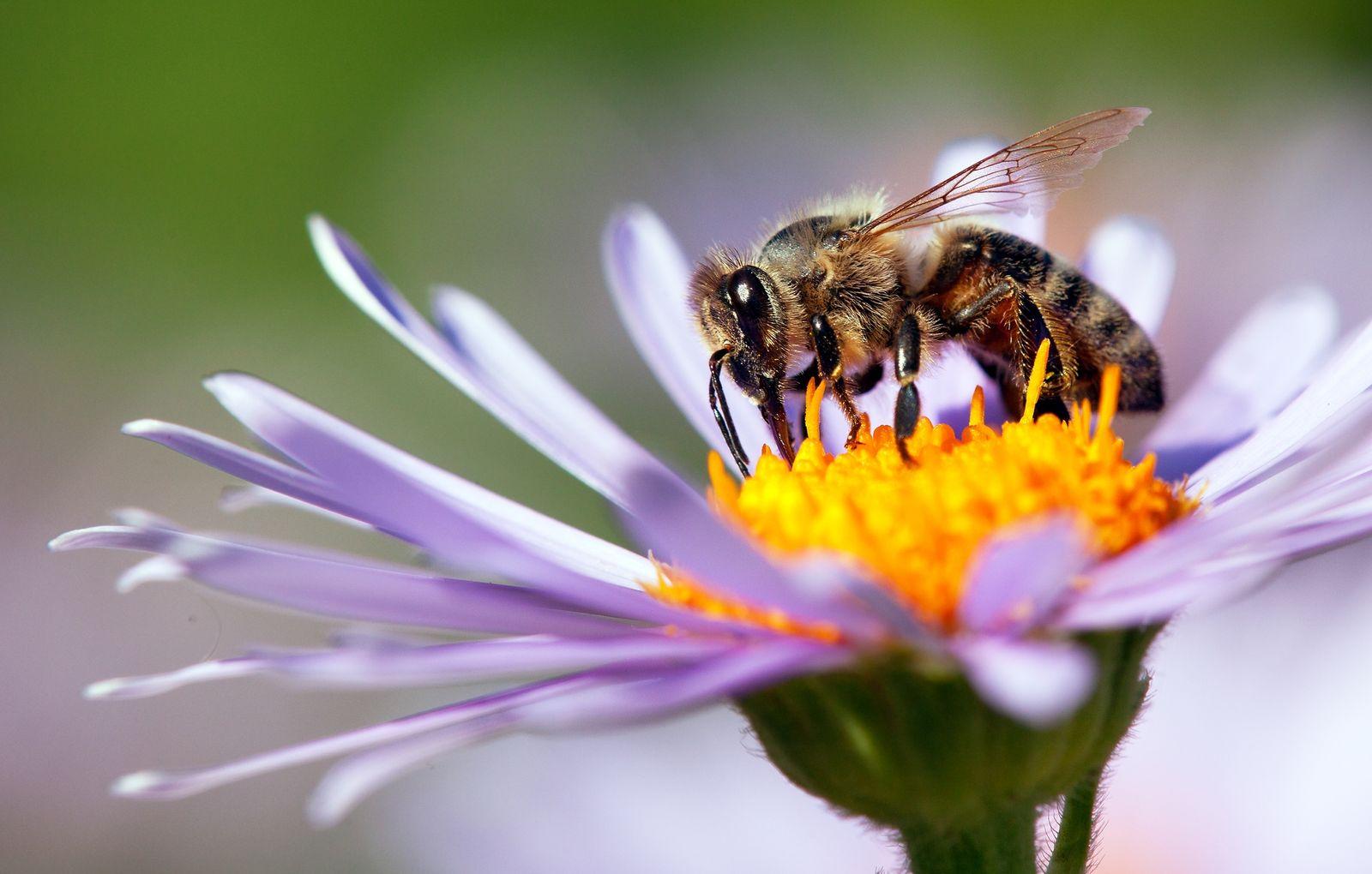 Bienenfreundliche Blumen 15 Blumen Die Die Brummer Lieben Werden