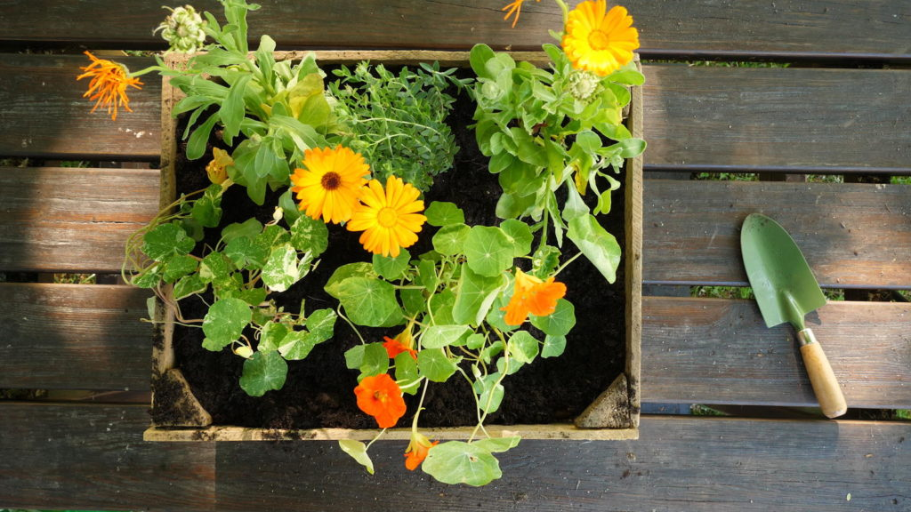 Bienenfreundlicher Blumenkasten mit orangenen und gelben Blumen