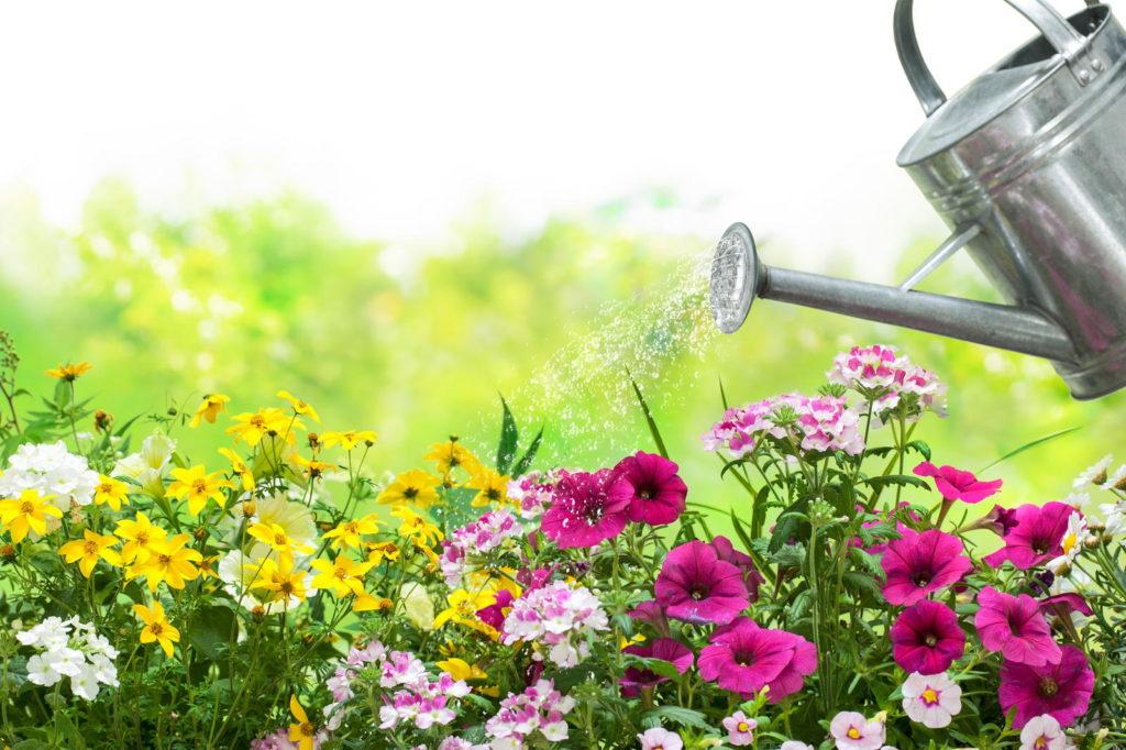 Gießkanne gießt Blumen im Garten
