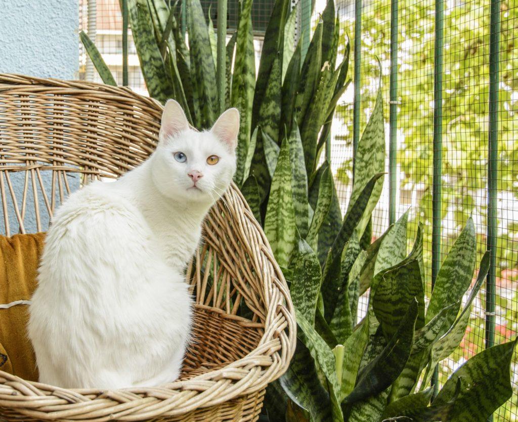 Katze sitzt neben einem Bogenhanf auf einem Korbstuhl