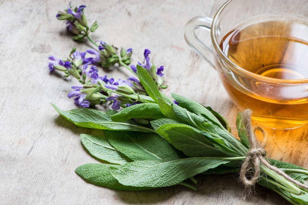 Bund Salbei mit Teetasse