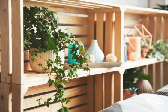 Efeu als Zimmerpflanze: Alles zum Pflanzen & Pflegen von Efeu im Topf