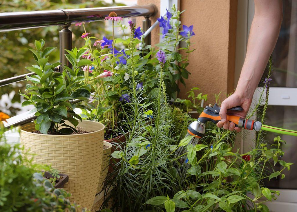 Gießen einer Glockenblume mit Wasserschlauch