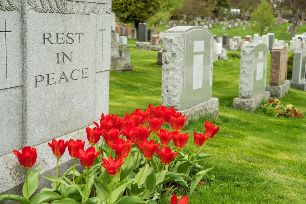 Rote Tulpen an einem Grab