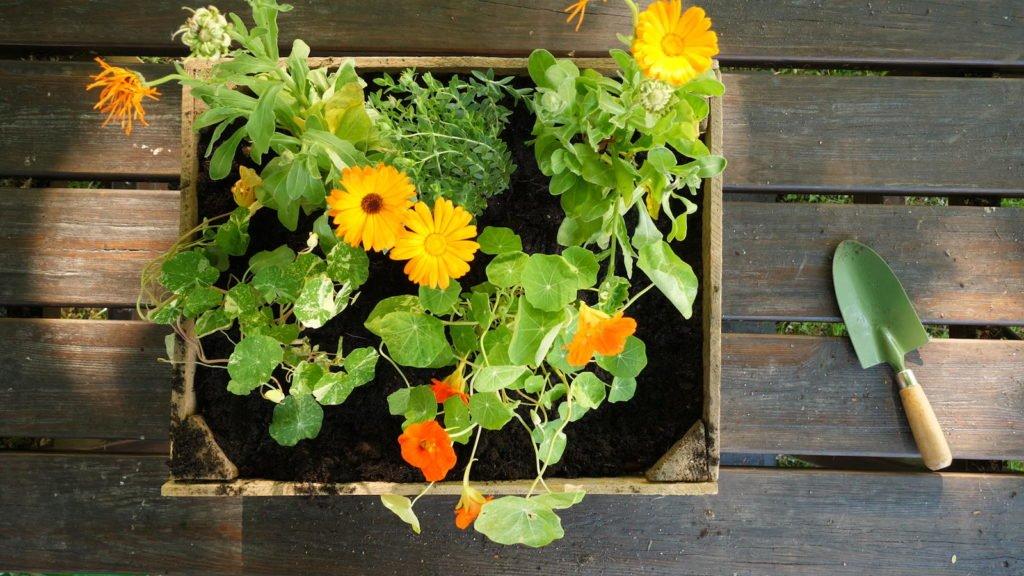 Blumen mit hellen Farben im Blumenkasten