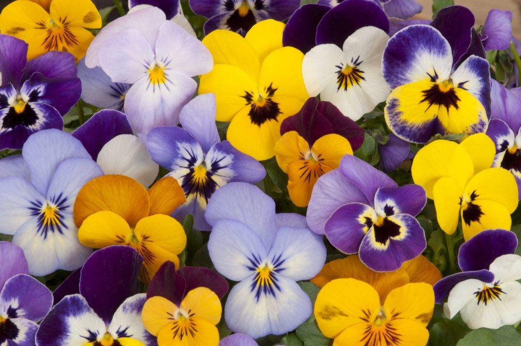 Welche Pflanzen mögen Bienen nicht? - Plantura