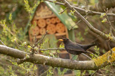 Naturschutz im Garten: 8 Tipps für das ganze Jahr