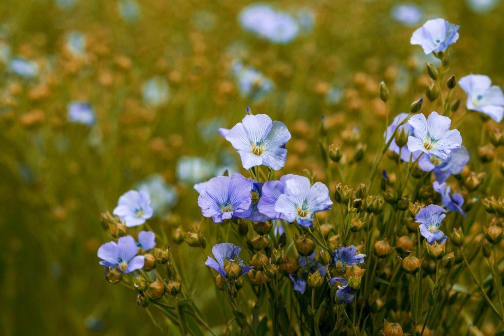 Helle blaue Pflanze