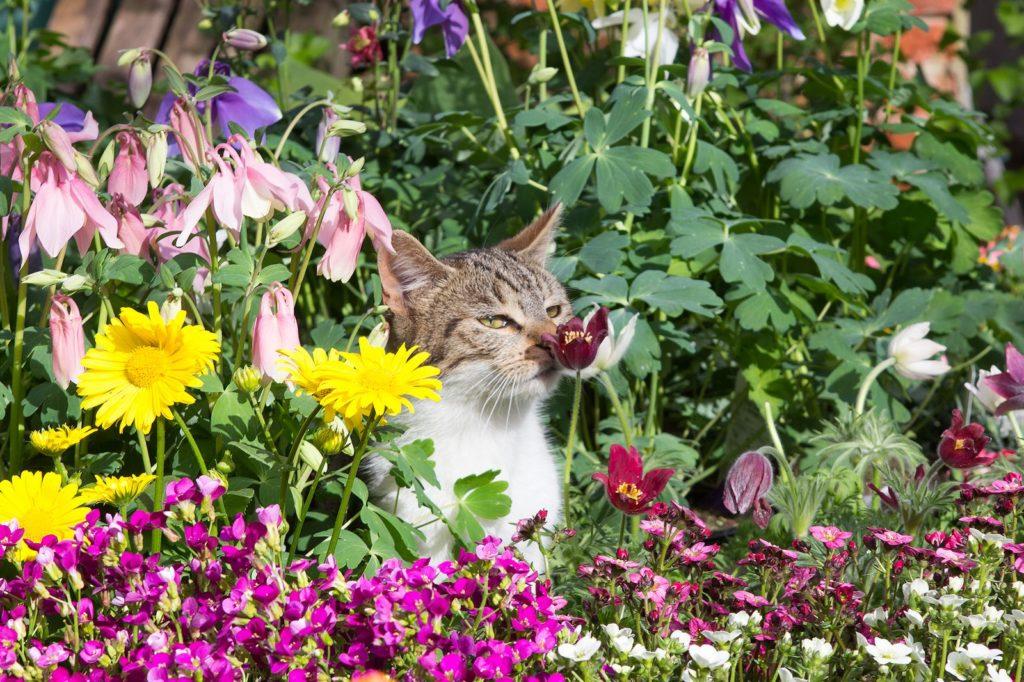 Katze im Blumenbeet schnuppert an Blüte