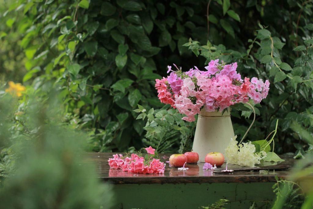 Phlox Vase