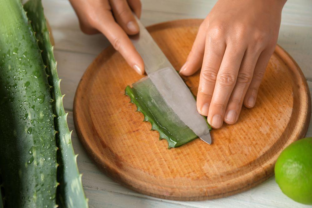 Aloe Vera Blatt mit Messer geschnitten