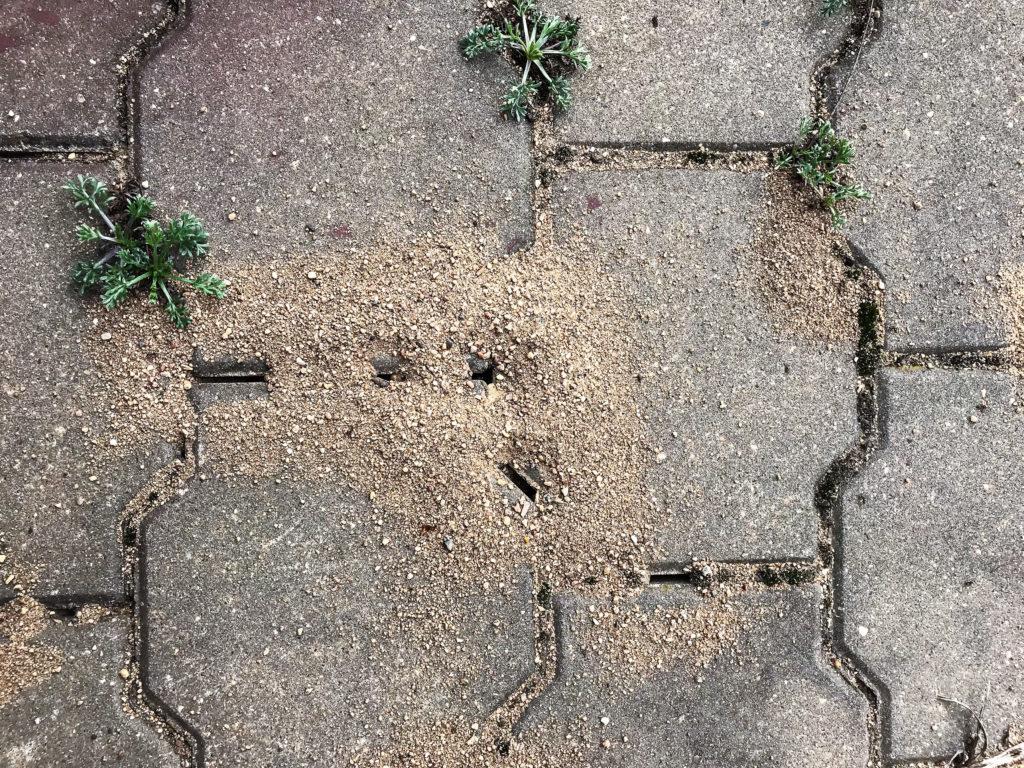 Ameisenstraße auf losen Pflastersteinen
