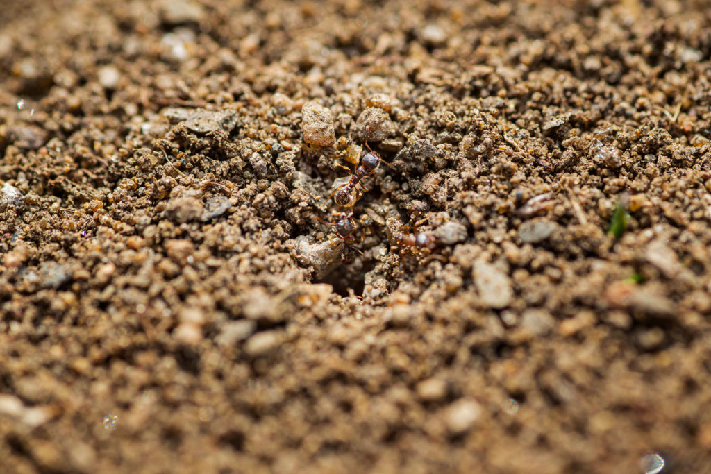 Ameisen krabbeln in ein Loch in der Erde
