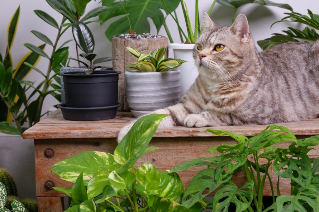 Katze neben Efeutute