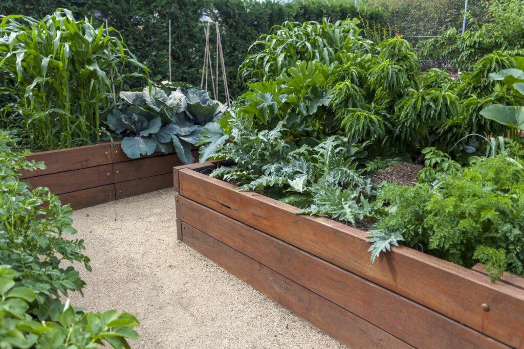 Gemüse in Hochbeeten