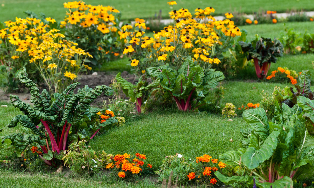 Mangold mit Blumen im Garten
