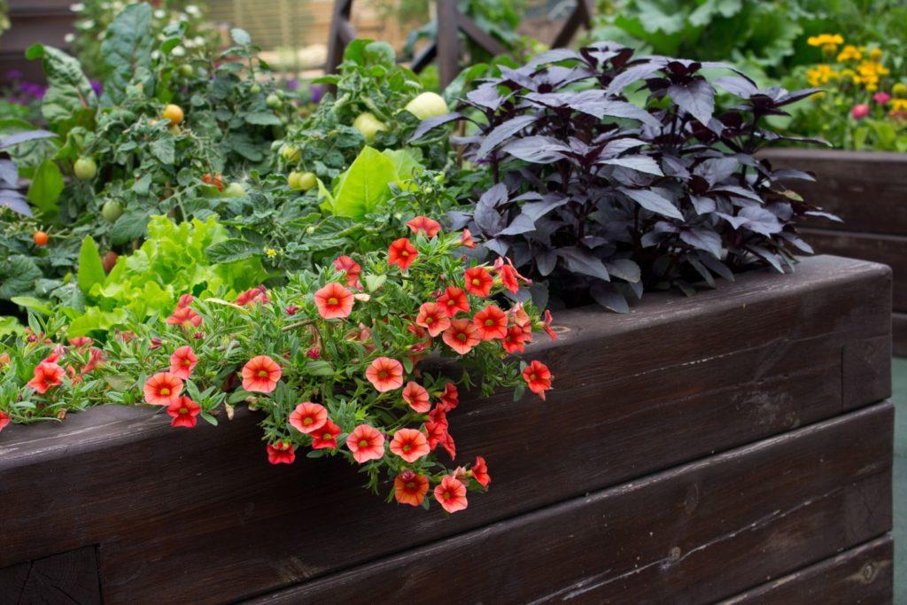 Mischkultur aus Blumen und Gemüse im Hochbeet